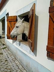 Box para cavalos